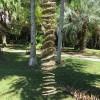 """""""73 Palms"""" by Ellen Ferrier"""